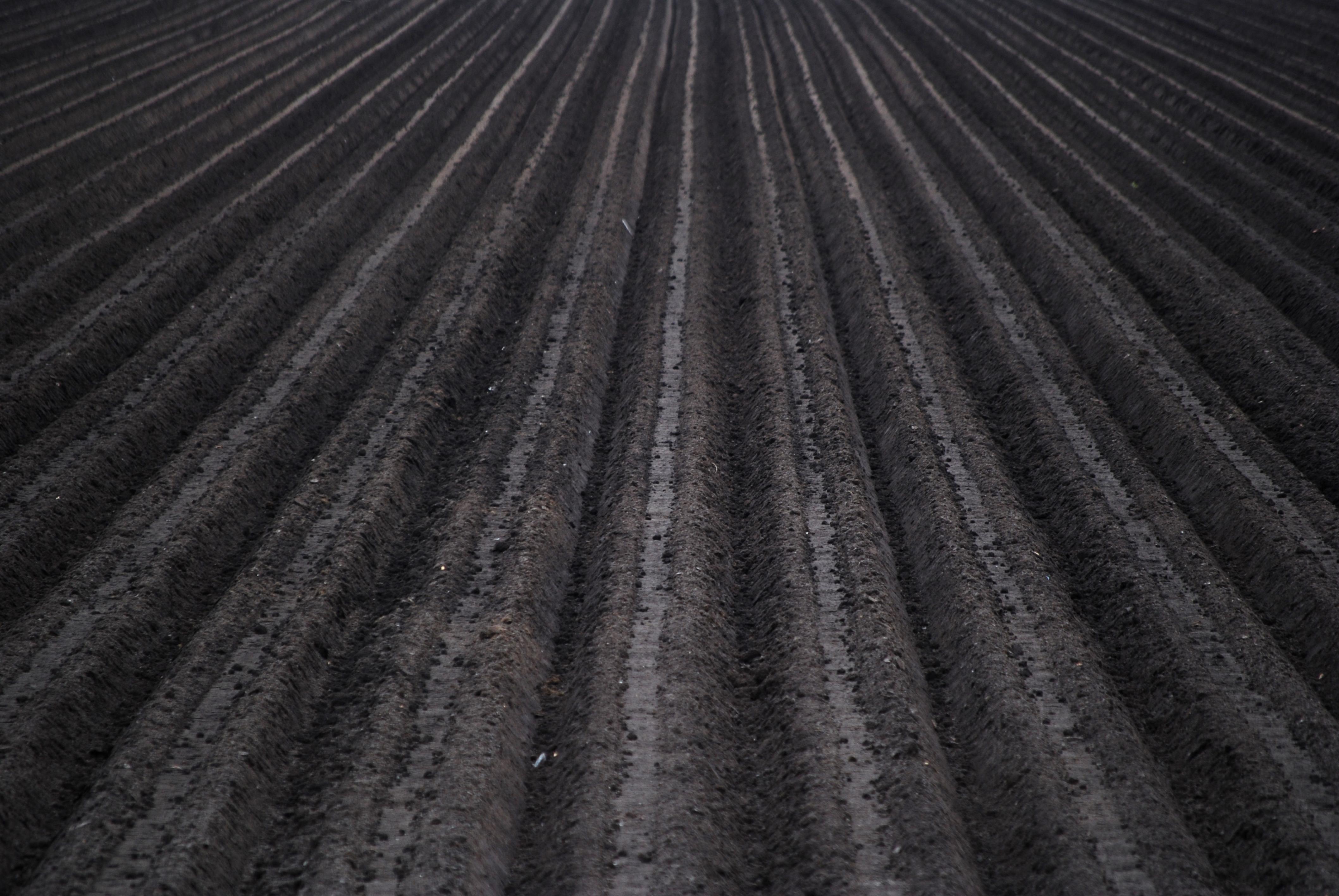 biochar farm soil fertility